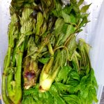 5月は山菜天が人気です!!