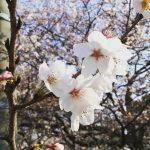 桜の咲く春にも色々な楽しみがある。